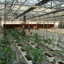 供應柳州畜牧養殖風機 養殖場水冷風機 種植場負壓抽風機 超市水冷空調圖片