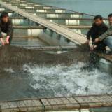 供应捕鱼专用渔网,湖南捕鱼专用渔网,捕鱼专用渔网生产厂家