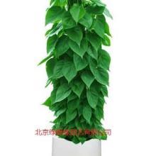 供应室内植物租赁绿植租摆服务 北京绿植租摆服务、北京花卉租赁、