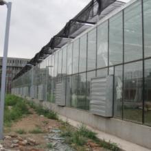 供应山东玻璃温室大棚制造,安徽玻璃温室大棚,