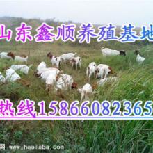 供应宣城市养羊厂、郎溪县养羊厂、广德县养羊厂、泾县养羊厂批发