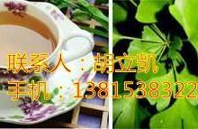 供应银杏保健茶
