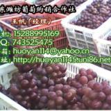 供应优质巨峰葡萄