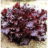 供应进口纯度高菜型美观的紫菜