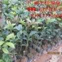 广州品种最齐全的苗圃图片