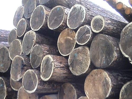 供应东莞木材进口报关代理图片