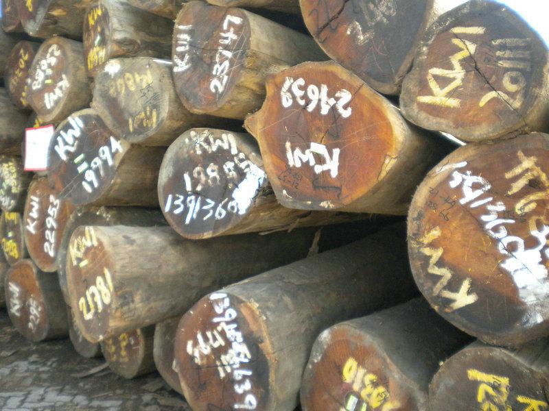 供应定远木材进口报关图片
