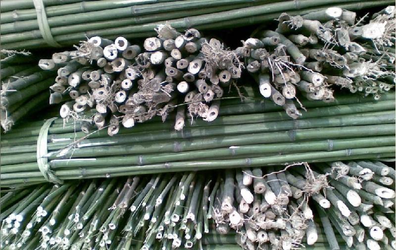 广西竹子加工电话 竹子加工价格多少,广西哪里有竹子加工厂家