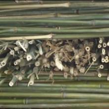 供应大庆哪里有竹片加工厂,大庆竹片大量加工,大庆竹片加工电话,大庆竹片加工厂报价