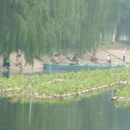 植物浮岛木材防腐保护工艺图片