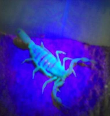 蝎子养殖图片/蝎子养殖样板图 (2)