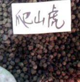 供应爬山虎种子价格、爬山虎种子质量、花卉种子、新种批发