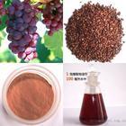 供应葡萄籽提取物 原花青素