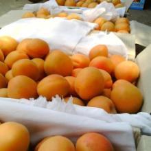 供应杏子价格,杏子行情
