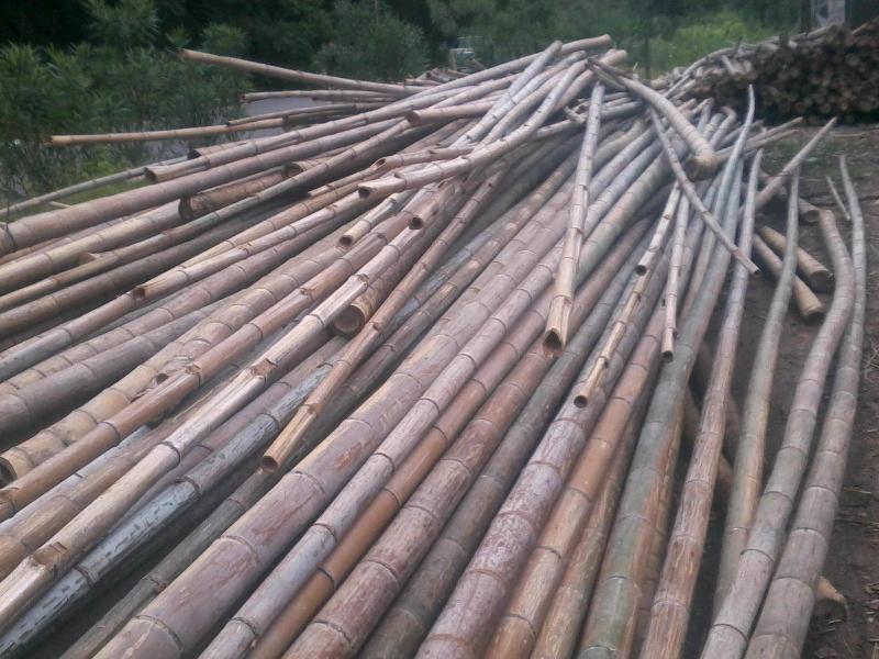 供应用于建筑的广西建筑脚手架用竹,建筑脚手架用竹批发,建筑脚手架用竹厂家