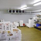 供应蔬菜冷冻库