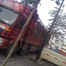 供应杭州到广州回程车调车公司,杭州到广州回程车,广州调回程车图片