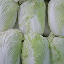 供应新鲜蔬菜及农产品