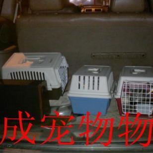 昆明宠物狗狗猫猫出国宠物回国图片