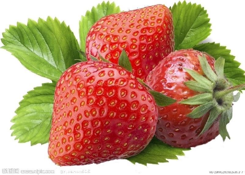 供应99草莓