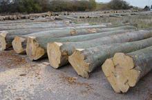 供应如何进口木材图片