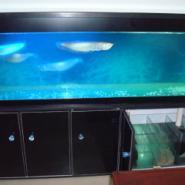 武汉龙鱼鱼缸图片