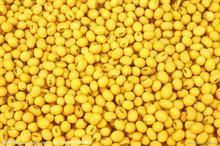 供应大豆甙元提取物批发