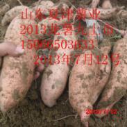 2014龙薯九图片