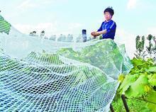 供应养鸡网 养殖网 塑料平网 防雹网 遮阳网 防虫网 防尘网 防风网