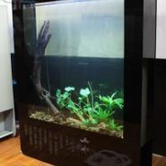生态鱼缸加盟图片