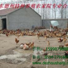 供应华北动物种苗
