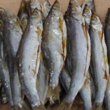 批发各种鱼干,冷冻品,鱼肉类