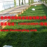 供应荣昌县人造草坪,重庆便宜草坪厂家直供,重庆幼儿园人造草坪供应商