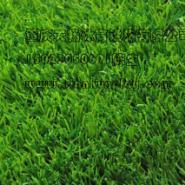 重庆巫山县屋顶人造草坪图片
