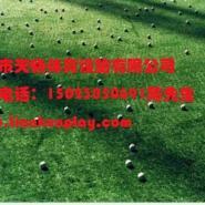重庆合川景区装饰人造草坪图片