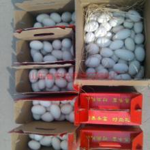 供应鹅蛋潍坊市