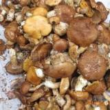 供应野生蘑菇的食疗功效