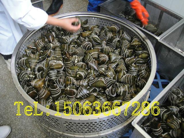 供应粽子煮锅