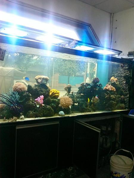 供应生态鱼缸的生产批发,广州生态鱼缸的生产报价,广州生态鱼缸的生产厂家