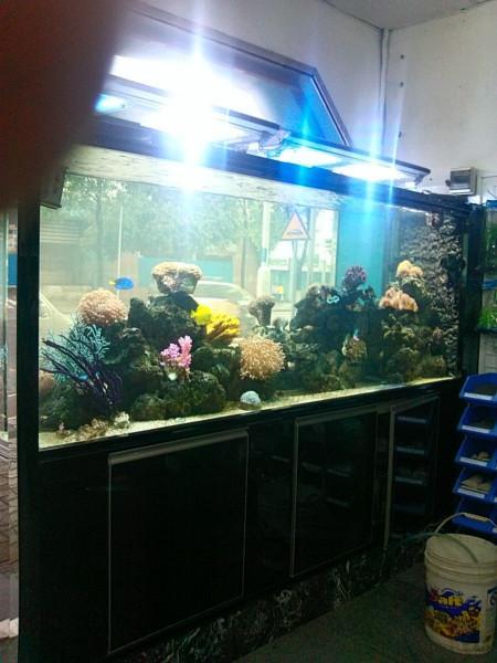 供应生态鱼缸的制作,广州生态鱼缸的制作,广州生态鱼缸的制作报价