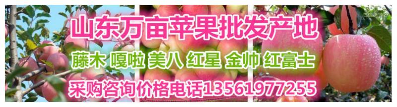 赵洪涛水果合作社