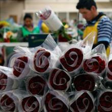 供应哥伦比亚玫瑰鲜切花进口报关公司