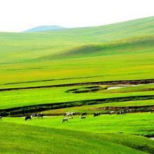 农业项目养殖项目可行性报告价格表