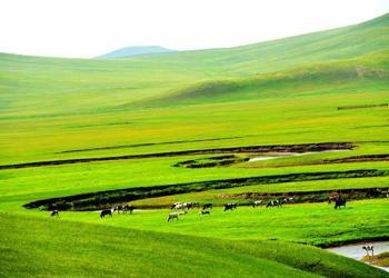农业项目养殖项目可行性报告图片
