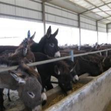 供应德州驴肉驴