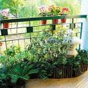 哪里的阳台绿化最好图片