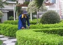 供应哪里有绿化养护卖上海绿化养护价格优惠,上海绿化养护厂家供应