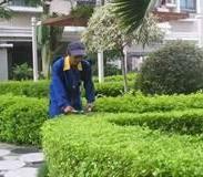 绿化养护多少钱图片