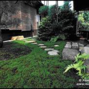 上海城市绿化图片