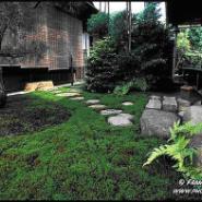 上海别墅花园图片图片